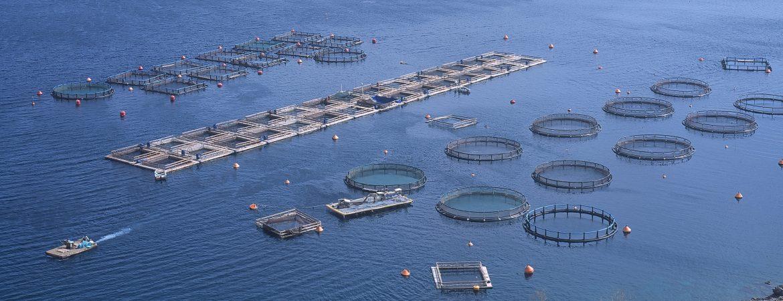 Strategic Spatial Planning to Establish Aquaculture Management Areas