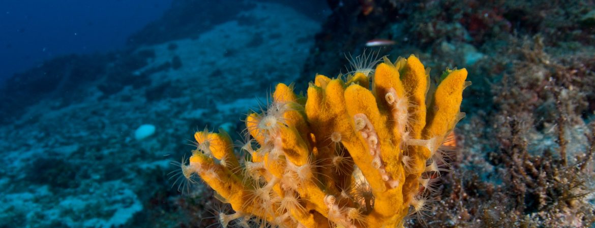 Diving Parks Network in the Mediterranean Sea