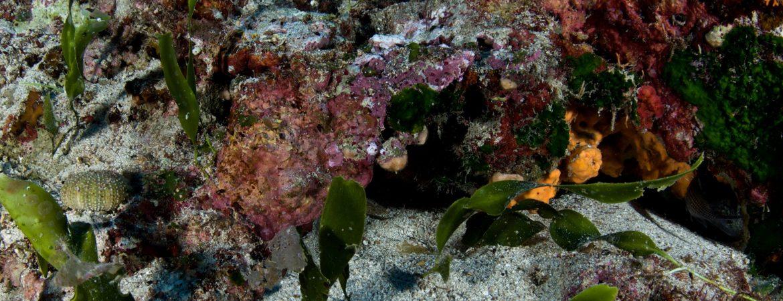 Establishment of Diving Park in Makronisos